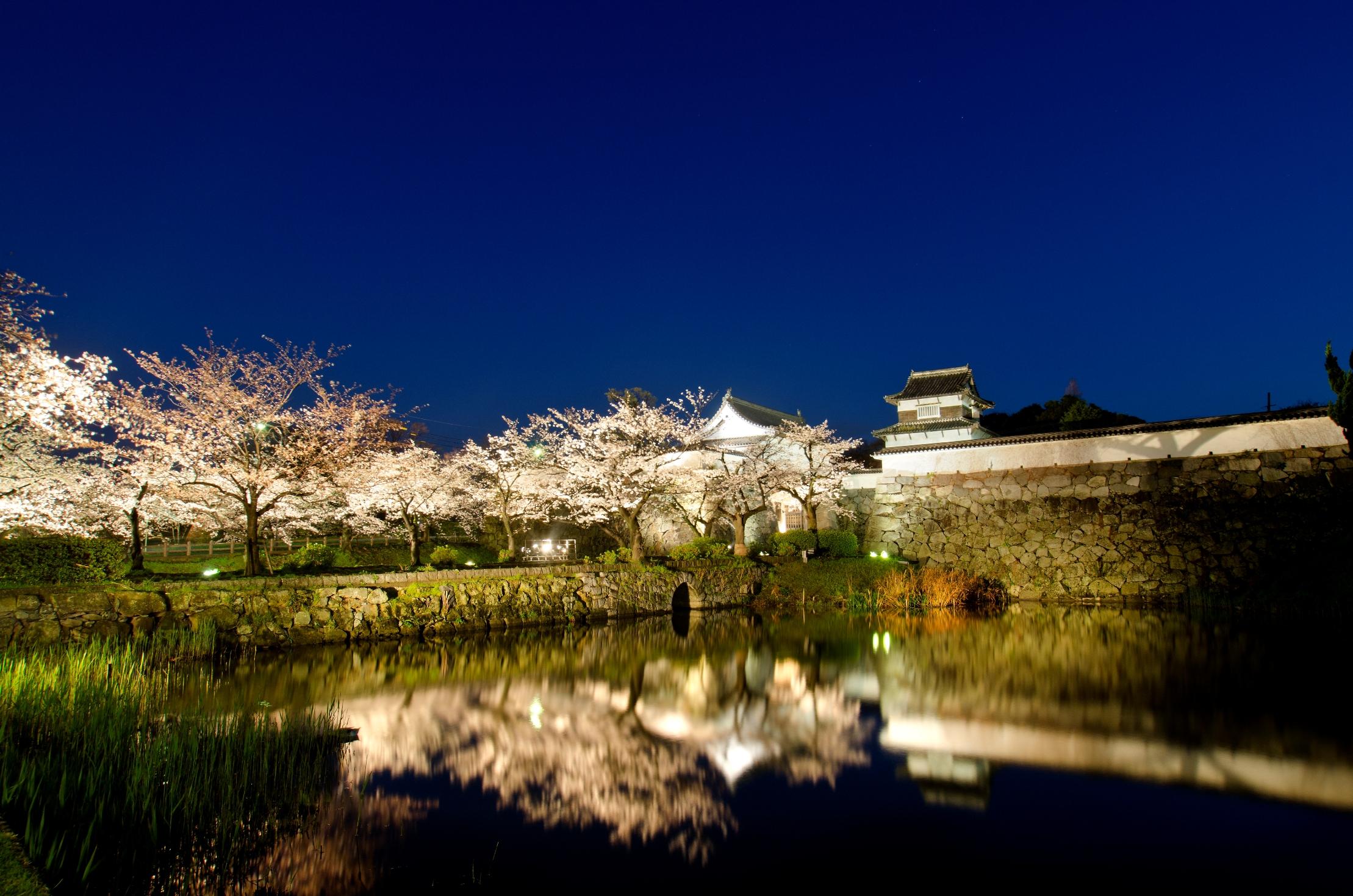 舞鶴公園・桜 福岡城さくらまつり